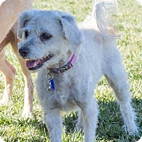 Adopt A Pet :: WEDNESDAY - Hurricane, UT