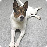 Adopt A Pet :: Kangaroo Karl - Lincolnton, NC