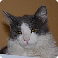 Adopt A Pet :: Trouble - Glendale, AZ