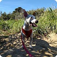 Adopt A Pet :: Skittles - San Francisco, CA