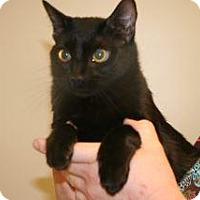 Adopt A Pet :: Josephine - Wildomar, CA