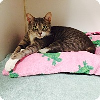 Adopt A Pet :: Carli - Oakland, NJ