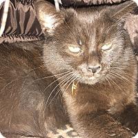 Adopt A Pet :: Ghirardelli - Georgetown, DE