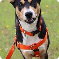 Adopt A Pet :: Chloe - Pinehurst, NC