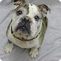 Adopt A Pet :: Buster - Santa Ana, CA