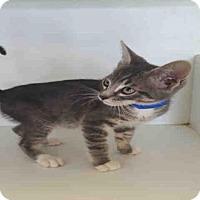 Adopt A Pet :: *JACKSON - Bakersfield, CA
