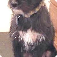 Adopt A Pet :: Isaac-ADOPTION PENDING - Boulder, CO