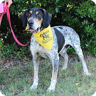 Hound (Unknown Type) Mix Dog for adoption in McCormick, South Carolina - Huck