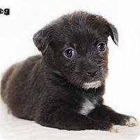 Adopt A Pet :: Meg - Shamokin, PA