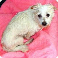 Adopt A Pet :: Bam Bam - Oswego, IL