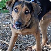 Adopt A Pet :: Digger - Hayden, ID