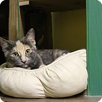 Adopt A Pet :: Tyra - West Des Moines, IA