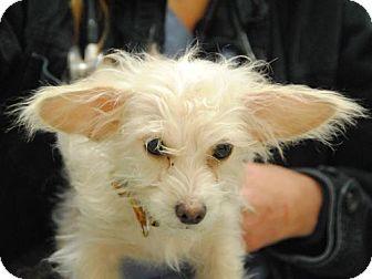 Terrier (Unknown Type, Medium) Mix Dog for adoption in Philadelphia, Pennsylvania - Harry