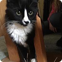Adopt A Pet :: Michaela - Leonardtown, MD