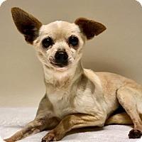 Adopt A Pet :: Olive - Chino Hills - Chino Hills, CA