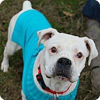 Adopt A Pet :: Ophellia - Shreveport, LA