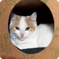 Adopt A Pet :: Guinness - Medina, OH