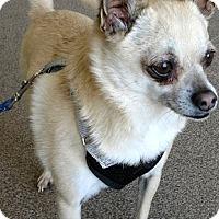 Adopt A Pet :: Sonny - San Diego, CA