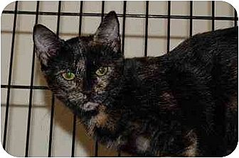 Domestic Shorthair Cat for adoption in Alpharetta, Georgia - Barn Cats