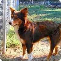 Adopt A Pet :: Ruby - Phoenix, AZ
