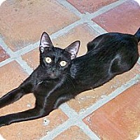Adopt A Pet :: Babymama - Scottsdale, AZ