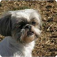Adopt A Pet :: Miriam - Meridian, ID