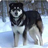 Adopt A Pet :: Loki - Belleville, MI