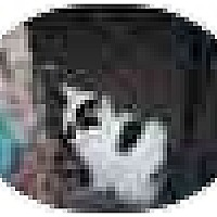 Adopt A Pet :: Minnie Me - Jenkintown, PA