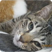 Adopt A Pet :: Bailey - Sterling Hgts, MI