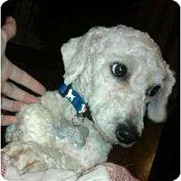 Adopt A Pet :: Bixie - Nashville, TN