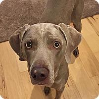 Adopt A Pet :: Ella - Grand Haven, MI