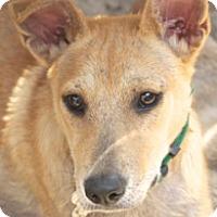 Adopt A Pet :: Cyrus - Norwalk, CT