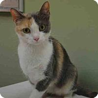 Adopt A Pet :: Princess Amy - New York, NY