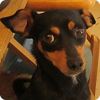 Adopt A Pet :: Joey - San Ysidro, CA