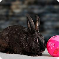 Adopt A Pet :: Licorice - Marietta, GA