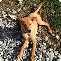 Adopt A Pet :: Haven - Cashiers, NC