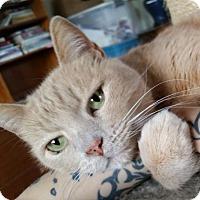 Adopt A Pet :: Sunny - Alameda, CA