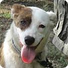 Adopt A Pet :: Kasey