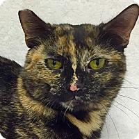 Adopt A Pet :: Bridget - Mission Viejo, CA