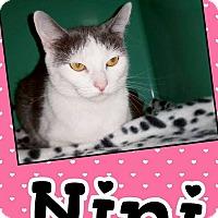 Adopt A Pet :: Nini - Edwards AFB, CA