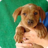 Adopt A Pet :: Alexis - Oviedo, FL