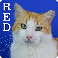 Adopt A Pet :: Red - Carencro, LA