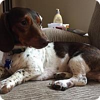 Adopt A Pet :: Sweetie - Alden, NY
