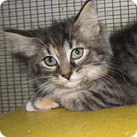 Adopt A Pet :: Mimi - Germantown, MD