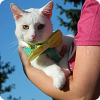 Adopt A Pet :: Blizzard - St. Charles, MO