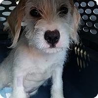 Adopt A Pet :: Grim - Gainesville, FL