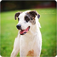 Adopt A Pet :: Hogan - Cincinnati, OH
