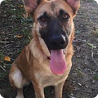 Adopt A Pet :: Tova - Greeneville, TN