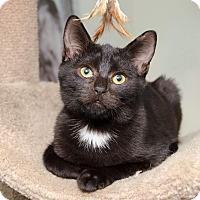 Adopt A Pet :: Shep - Columbus, OH
