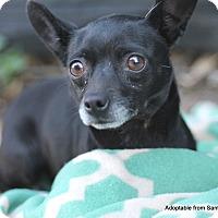 Adopt A Pet :: Boo - Goleta, CA